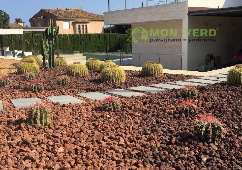 cactus en invierno