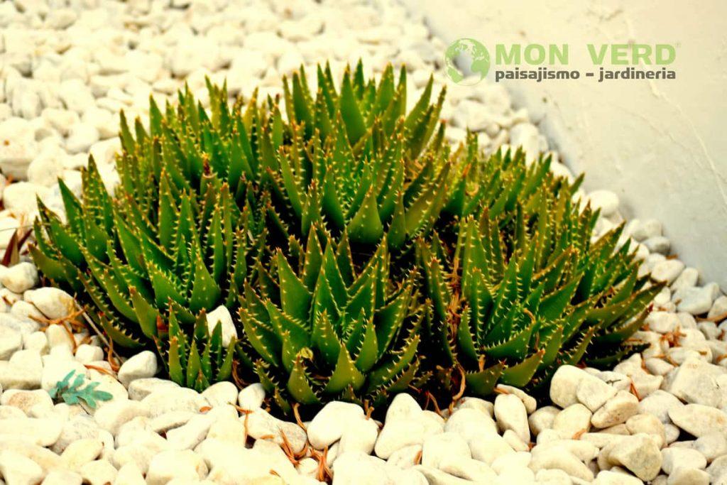 cactus invierno