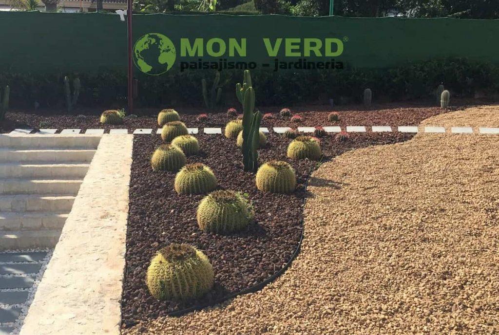 como hibernan cactus